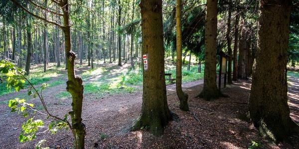 Szép fasorral veszi kezdetét a túra a tanösvényen (Bőgős-rét)