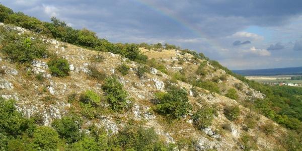 A Vértes dolomit-sziklagyepei