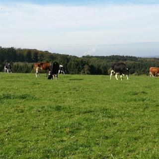 Auch auf dem Land gibt es Rindviecher