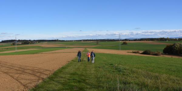 Wanderweg zwischen Wiesen und Äckern mit toller Aussicht