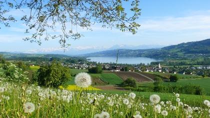 Ausblick vom Eichberg, Seengen