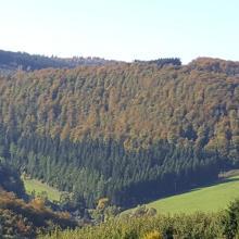 Foto von Wanderung: Golddorf Route Oberkirchen • Sauerland (06.10.2017 06:56:37 #1)