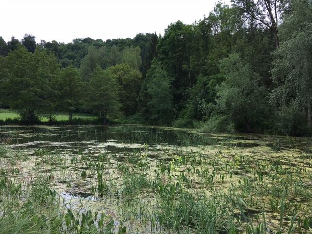 Fischweiher Bad Imnau