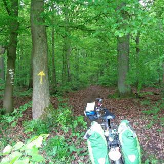 im Hildesheimer Wald (Mai 2017)