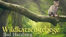 Zum Wildkatzengehege über Wildkatzen-Walderlebnis und Wildkatzenstieg