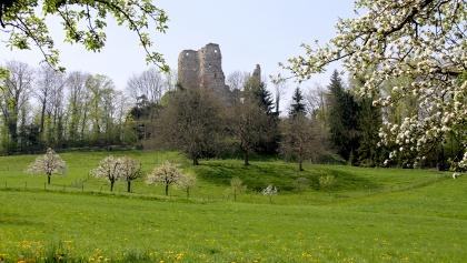 Ruine Pfeffingen.