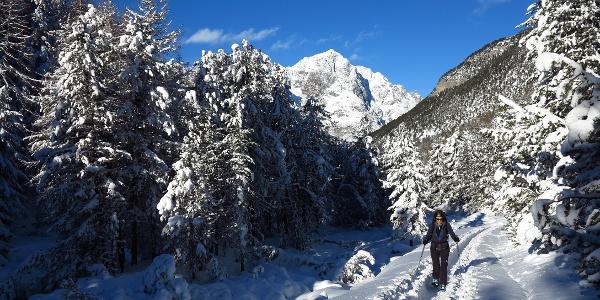Aufstieg vom Val S-charl durch den Winterwald.
