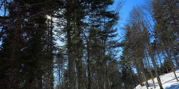 Zu Beginn geht es durch den Wald von Nods.