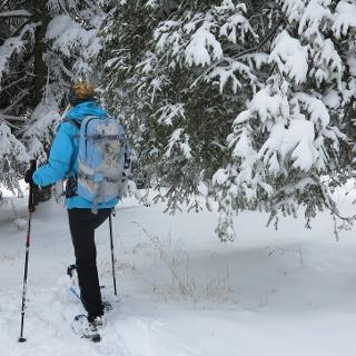 Hinein in den winterlichen Jurawald.