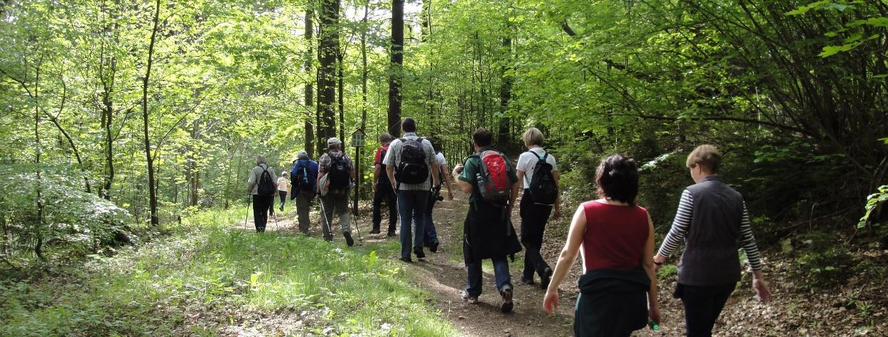 Wandern im Frühling in Grünhainichen