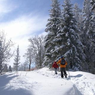 Durch den winterlichen Jurawald.