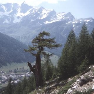 Wald Richtung Simplon - foto: Andreas Weissen
