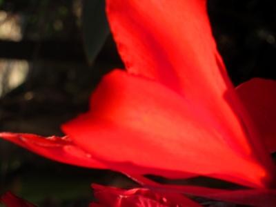 Blütenpracht in der Herbstsonne