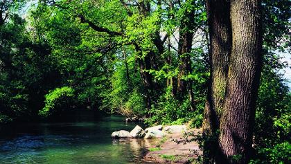 Der Flusslauf und die Auen der Alte Aare