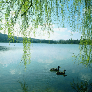 Lake of Burgäschi