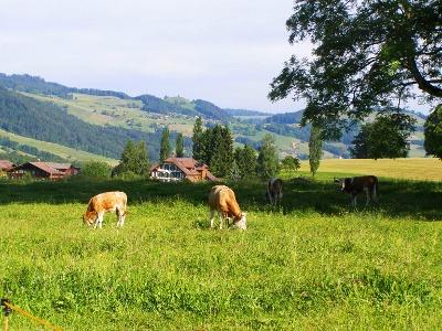 Rural idyllique de Schubhus avant Blumenstein