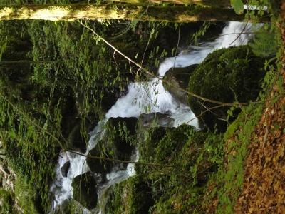 Flüsschen Ibach im Chaltbrunnental 2