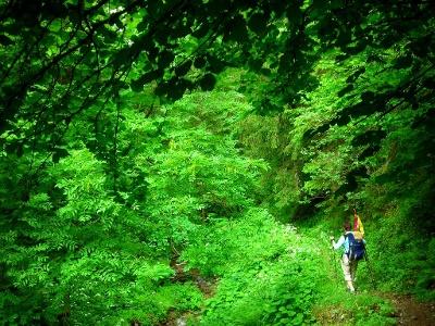 auf Waldpfaden