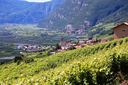 Corteccia-Niclara - Cortina