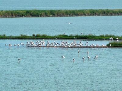 Lagune Comacchio