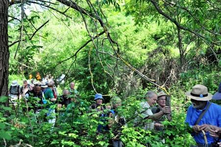 Dschungel im Valle Santa