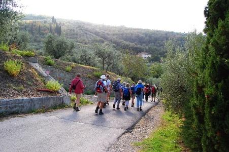 eine Strecke dominiert von Olivenbäumen