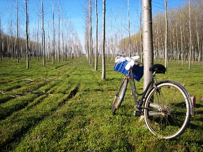 Orio Litta: a bike cemetery?