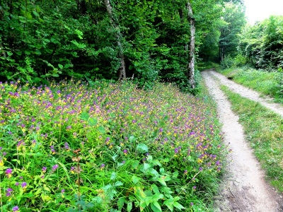 Les Côtes : Flore en bordure de chemin