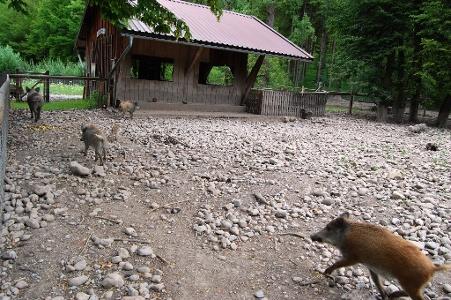 vorbei an kleinem Zoo