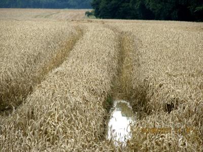 Ernte-Rückstand nach anhaltendeml Regen