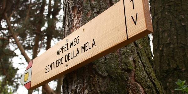 Apple Trail