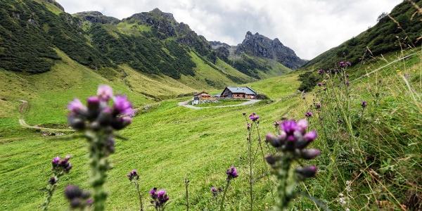 Alp Nova mit Blick in Richtung Madrisella und hinteres Ende des Novatals