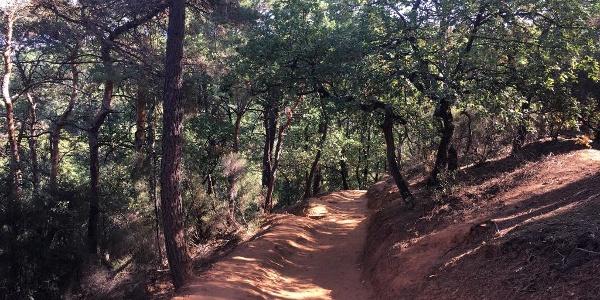 Shady path on the Sentier des Ochres