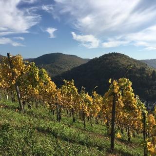 Enkirch im Herbst