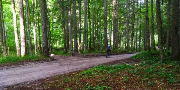 Forstweg zur Bodenalm