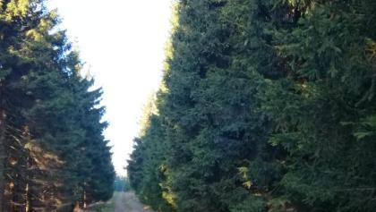 Rennsteig zwischen Oberhof und Brotterode