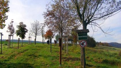 Beginn des Baumlehrpfades Altenberga
