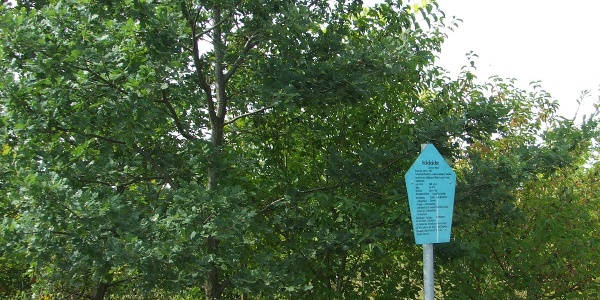 Pfad des Baumes Hohendorf
