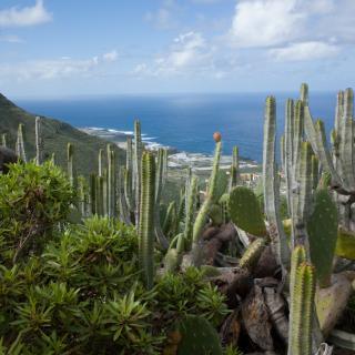 Ziel Bajamar nach kurzem Aufstieg stets vor Augen