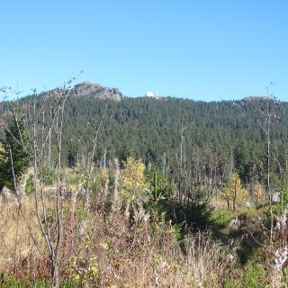 Blick auf den Großen Arber (vom Panoramaweg aus)