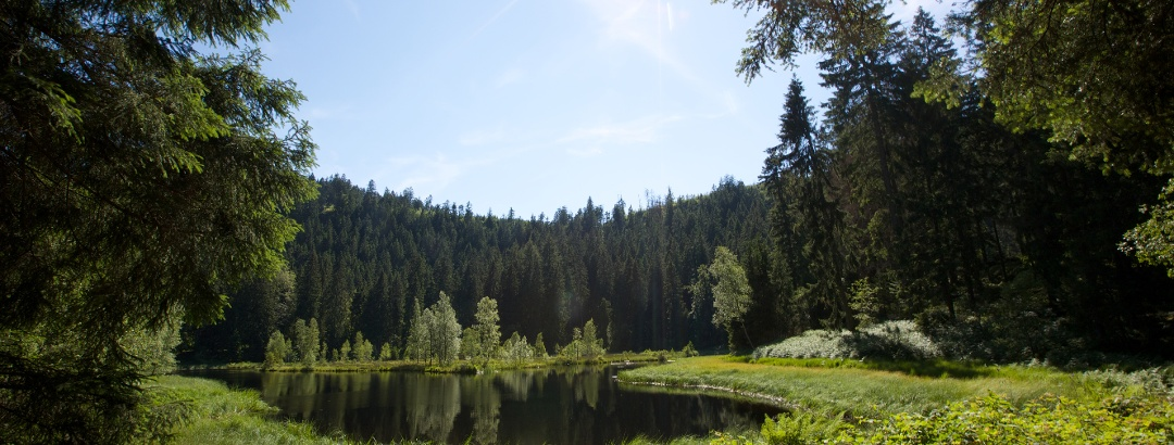 Buhlbachsee