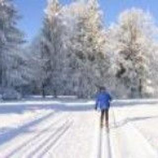 Skilangläufer im Winterwald