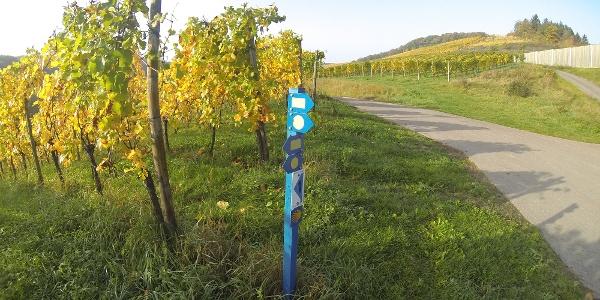Weinberg nahe Schengen