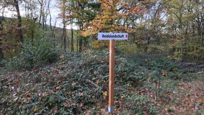 Heidelandschaft bei Gimsbach - zufällig entdeckt