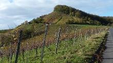 Wanderung von Prüßberg bei Michelau über die Burgruine Stollberg zum  höchsten Weinberg Frankens bei Handthal und dann weiter über die Weinberge von Oberschwarzach zum Baumwipfelpfad bei Ebrach