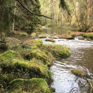 Tirschenreuther Waldnaab