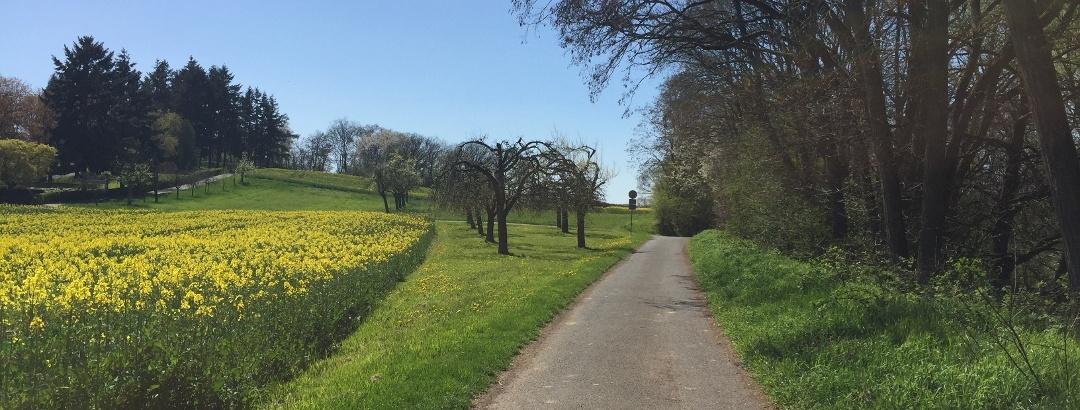Impressionen Lahnpark Rundweg