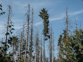 Foto Wald 2050