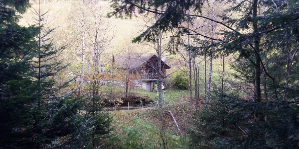 Teichwirt Brander_Blick durch den Wald