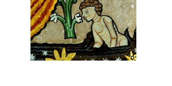 19 Hildegard-Tafel: Heilpflanzen